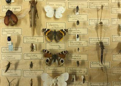 Collezione di insetti (particolare) (10)