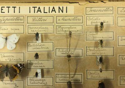 Collezione di insetti (particolare) (3)