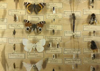 Collezione di insetti (particolare) (7)
