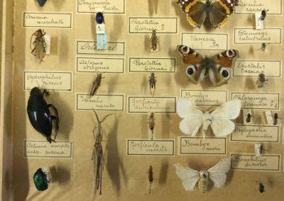 Collezione di insetti (particolare) (8)