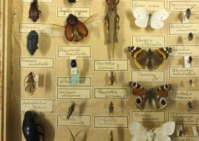 Collezione di insetti (particolare) (9)