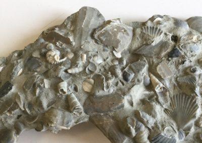 Frammento di calcare fossilifero (4)
