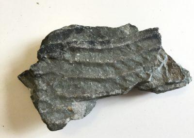 Impronte di piccole ripple marks su argilla, facies di ambiente costiero (Monti Pisani)