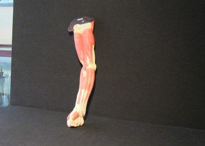 Modello del braccio, 3