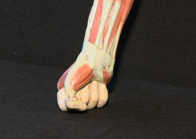 Modello del braccio (mano e polso)