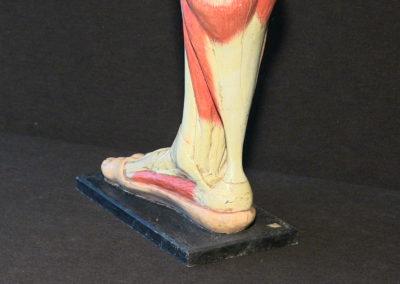 Modello del piede