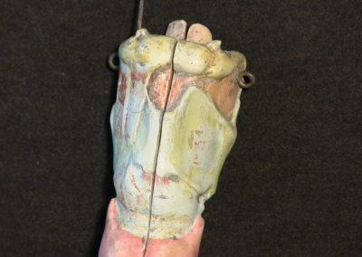 Modello esterno della Laringe, 2 (2)