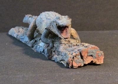 Piccolo coccodrillo tassidermizzato (2)