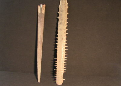Rostri (prolungamenti mascellari) di pesce spada e pesce sega