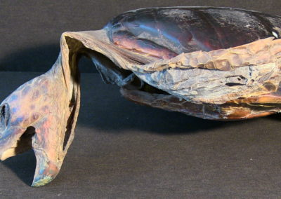 Tartaruga marina (carapace, testa, arti), (4)