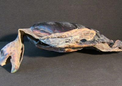 Tartaruga marina(carapace, testa, arti),(2)