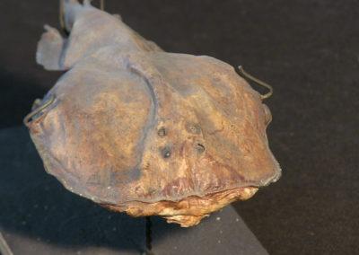 Torpedine (4)