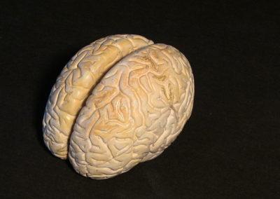modello del cervello, 2