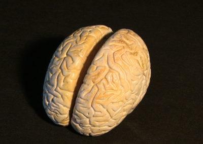 modello del cervello, 3