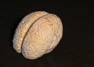 modello del cervello